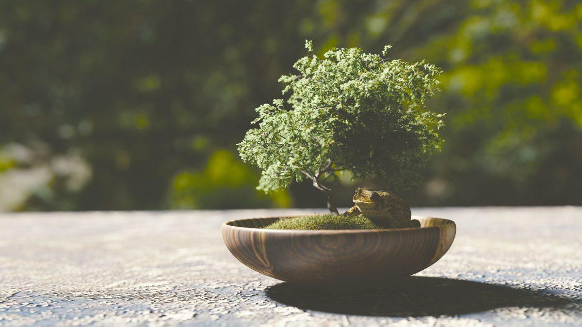 bonsai-1313531_1920